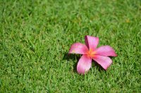 photo wallpaper - flower and grass